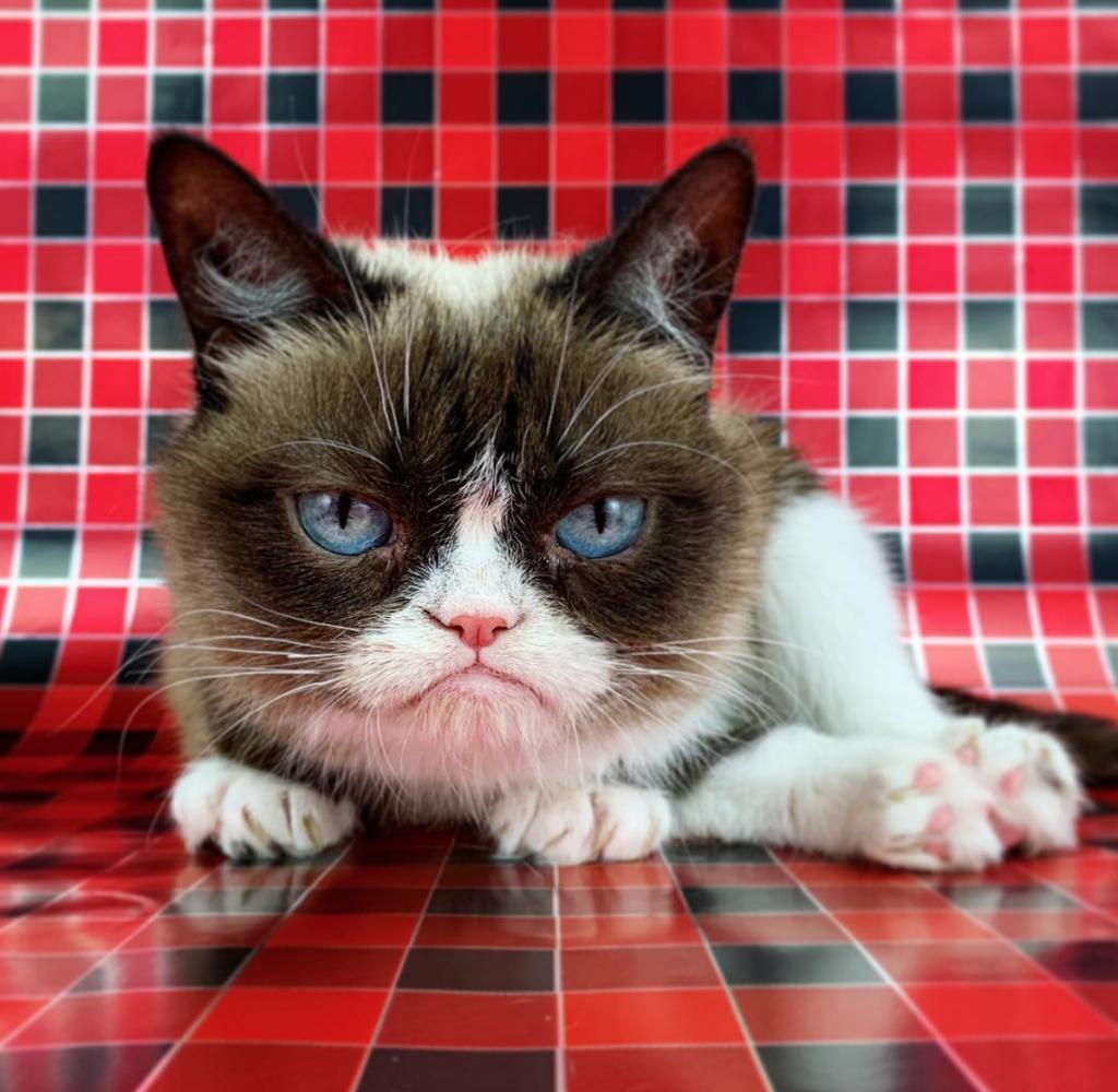 Internet Sensation Grumpy Cat Dies Aged Seven